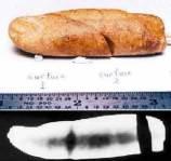 """Bu cisim Kanada'nın Kuzey kutup bölgesindeki Axel Heiberg adası eski fosiller koleksiyonunda bulunmuştur. İncelemeler bunun bir insan parmağı fosili olduğunu gösteriyor. Bu fosil 100 ile 110 milyon yıl öncesine aittir (Creataceous jeolojik dönemi). Bu fosil """" DM93-083 """" numarasıyla arşivlenmiştir. Röntgen ışınlarıyla yapılan inceleme sonucunda yukarıdaki resimdeki siyah kısımların parmak kemiklerine ait olduğu ortaya çıkmıştır. Bu kadar eski zamanlarda insan yaşamış olabilir mi?"""