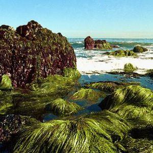 One Week on a Seaweed Diet Will it Work Heres What Happened HERO
