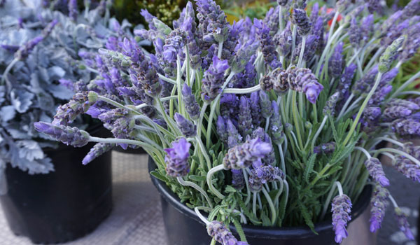 How to Cast a Spell: to Change and Improve an Aspect of The Self | Lavender