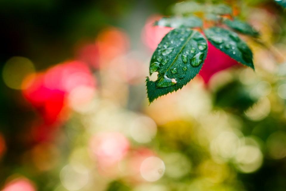 Morning Rain Aly Dawn Photography