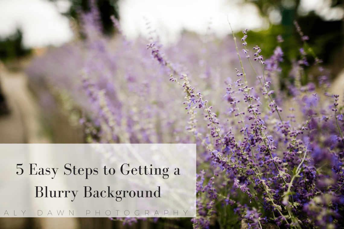 5 Easy Steps to Getting a Blurry Background (1)