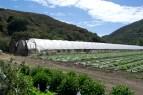 0670_crops_tents