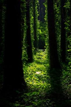 A Path To Nowhere by Nuno M. Ribeiro