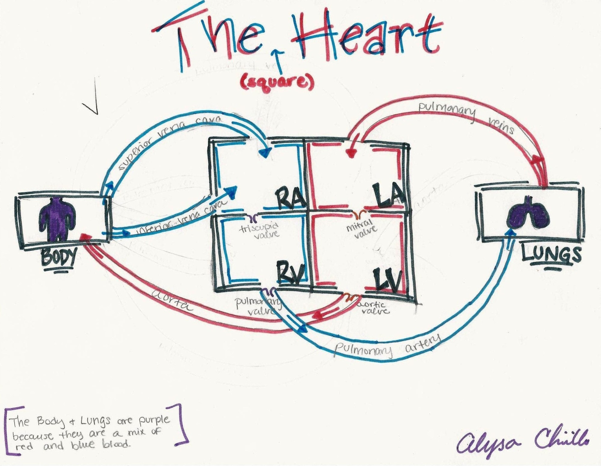 hight resolution of heart box diagram