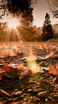 Sun Loves the Leaves