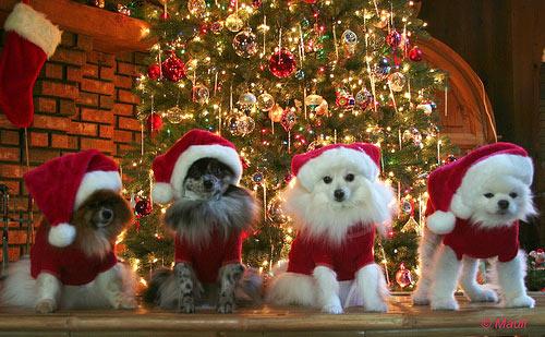 wish_you_merry_christmas