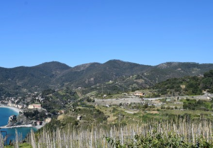 View of Monterosso's crops
