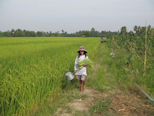 Rural Thailand Photo courtesy of eprivass