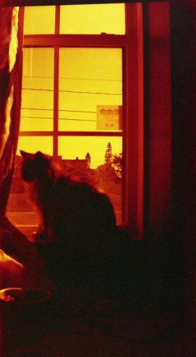 Lomography redscale
