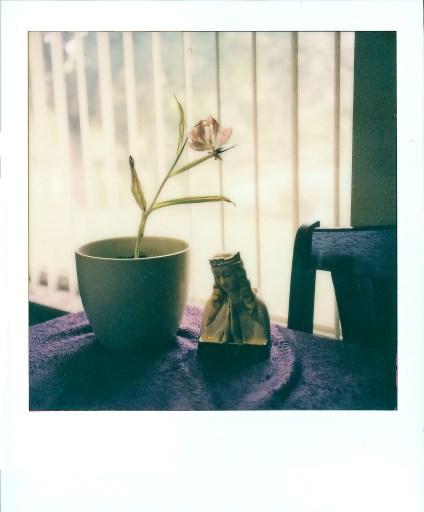 Dead Tulip