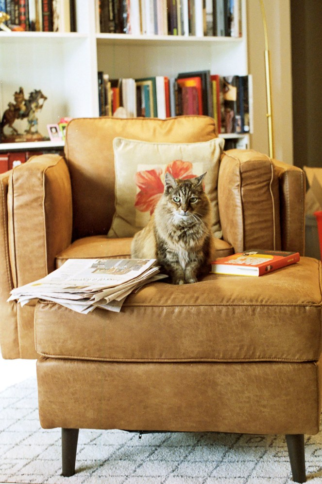 cat on chair in home library
