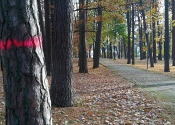 Džiūstančių, sausų pušų kirtimai Alytaus miesto sode planuojami lapkričio-gruodžio mėnesiais