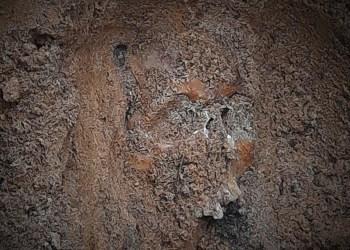 Žmogaus kaukolė, Alytuje rasta karinių pratybų metu