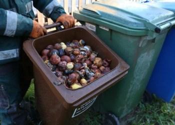 Į maisto atliekų konteinerius reikia mesti maisto, virtuvės ir žaliąsias atliekas