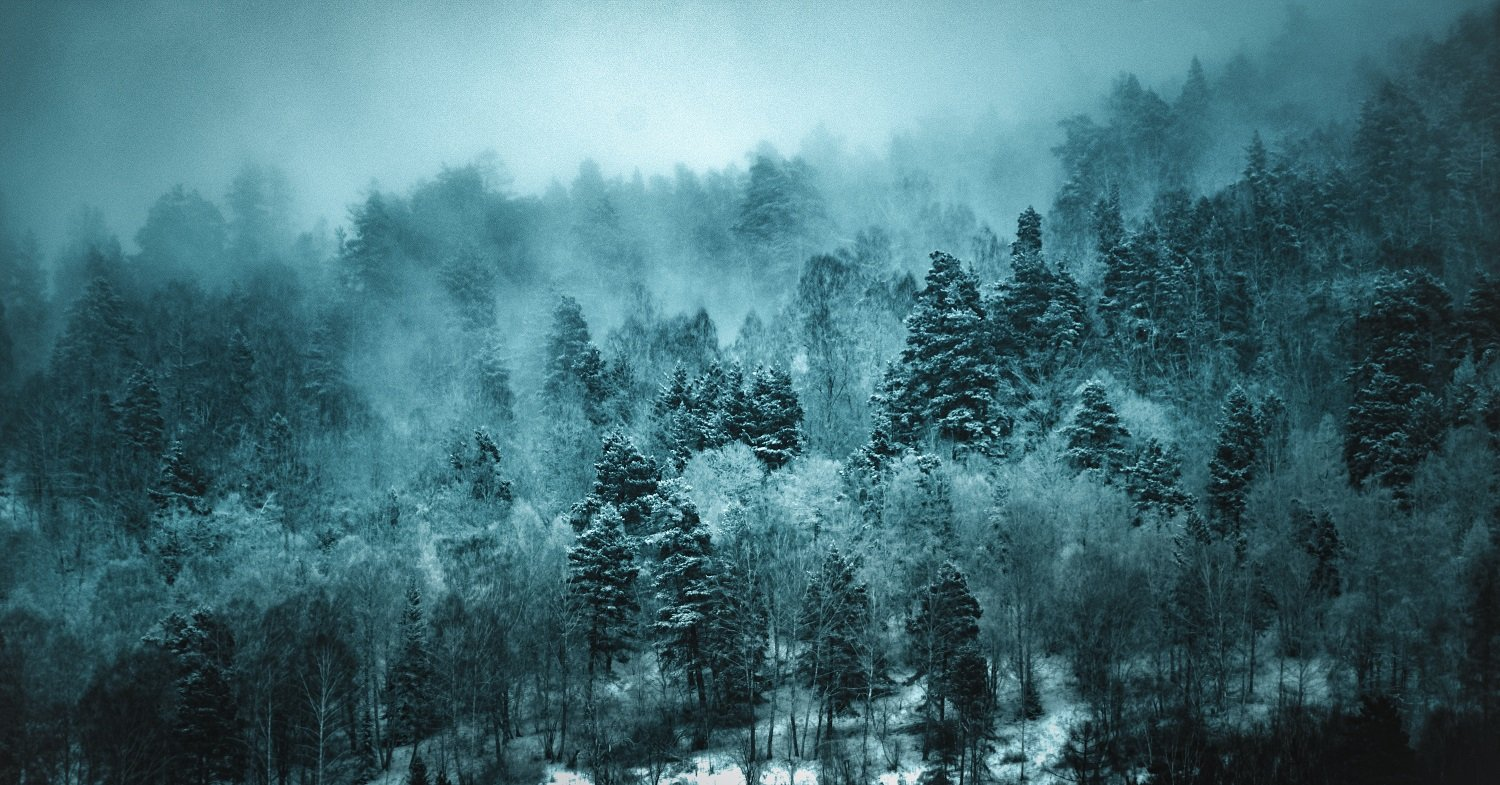 trees in snow and fog to inspire peace and calm