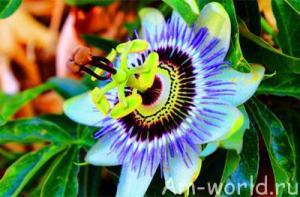 Растения могут думать и соображать