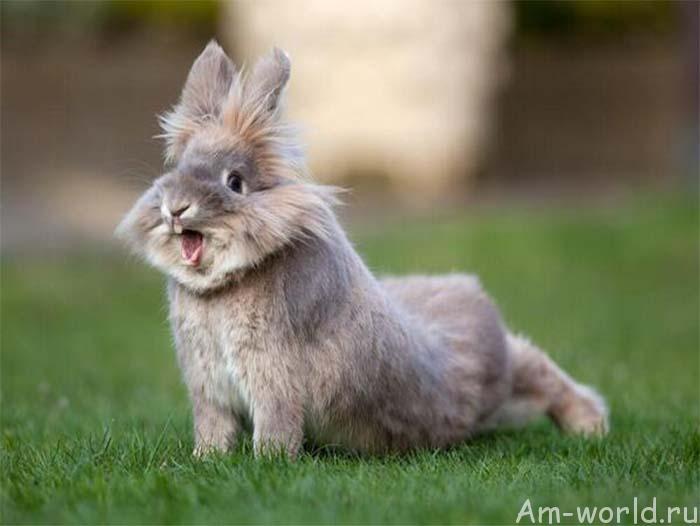 Кролики опасны! И зубы ни при чем!