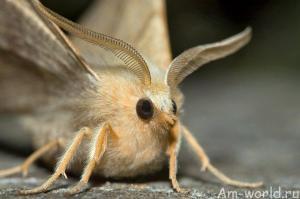 Бабочки летают! Бабочки!!!