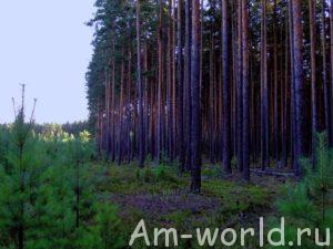 """Берегите лес - наше """"зеленое золото"""""""