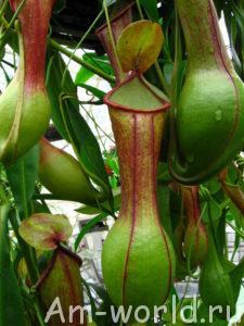 Кровожадные растения-убийцы