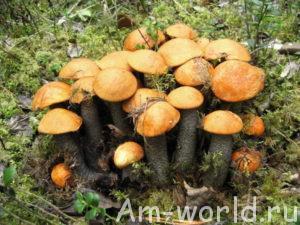 Грибы в лесу - властелины планеты