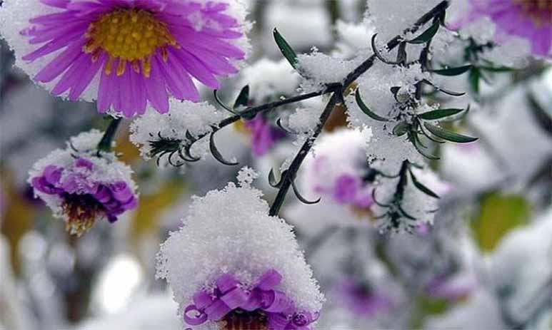 Зима посреди лета