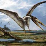 Птерозавры тоже вылуплялись из яиц