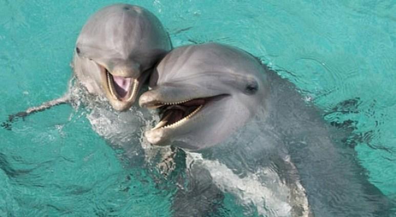 Загадки бескорыстных дельфинов