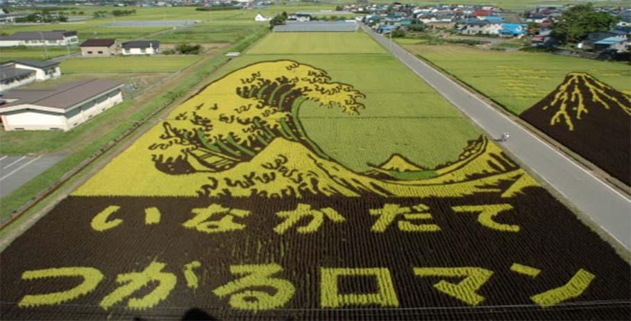Тамбо — искусство японских землепашцев деревни Инакадате
