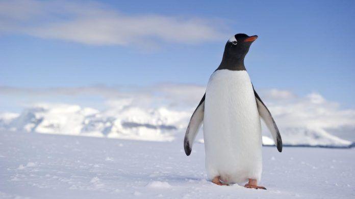 Жизнь простого пингвина