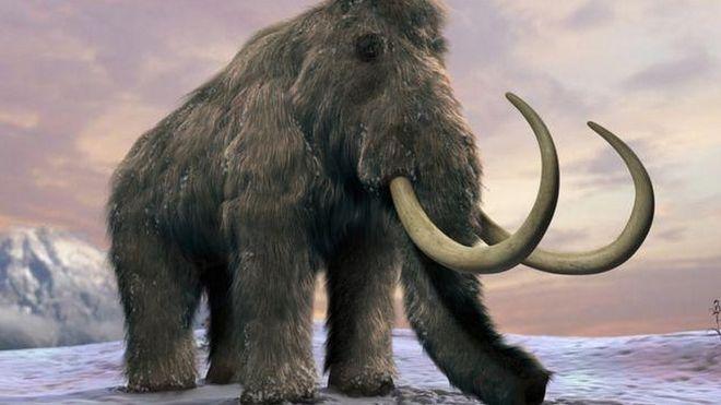 Можно ли клонировать мамонта?
