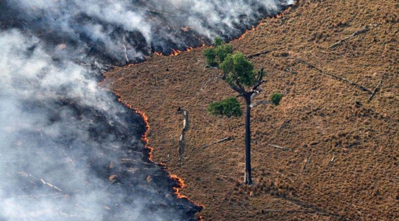"""Amazonas: califican al incendio como una """"catástrofe continental"""" con """"impacto mundial"""""""