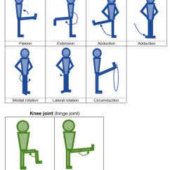 Arm Bones And Muscles Diagram Wiring For Caravan Solar Panel Level 2 Exercise Fitness Knowledge (5:joint Action) - Amac Training