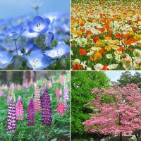森林公園の春の花畑
