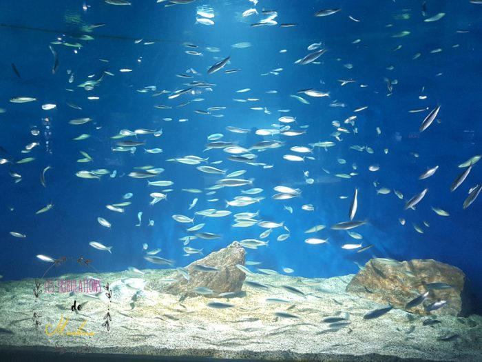 aquarium-la-rochelle-accessible-enfants