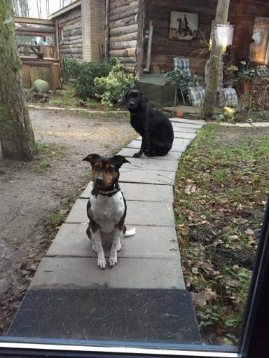 Hundene 1
