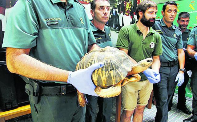 Smantellato traffico di tartarughe - immagine Diario de Mallorca