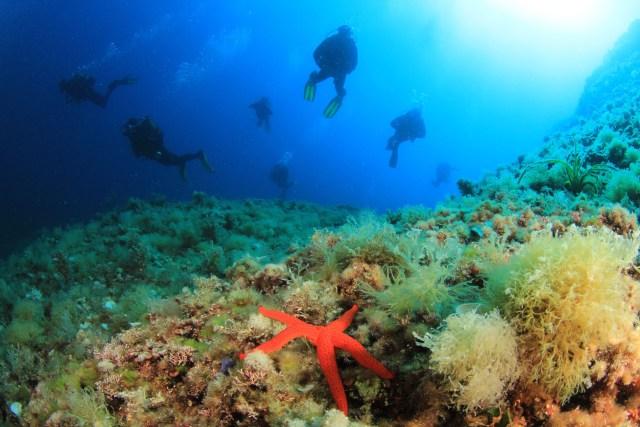 Fondale marino