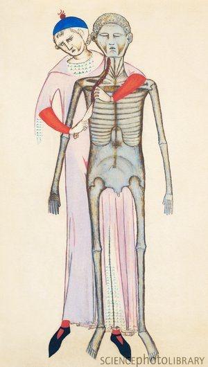 Anathomia 1345