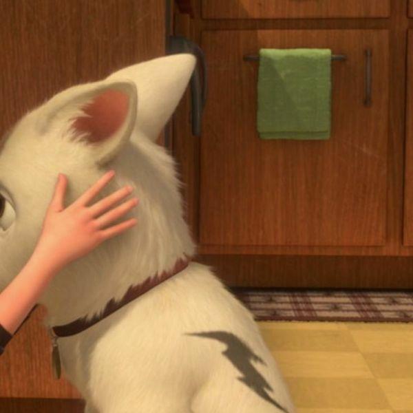 cachorrinho sendo beijado por sua dona