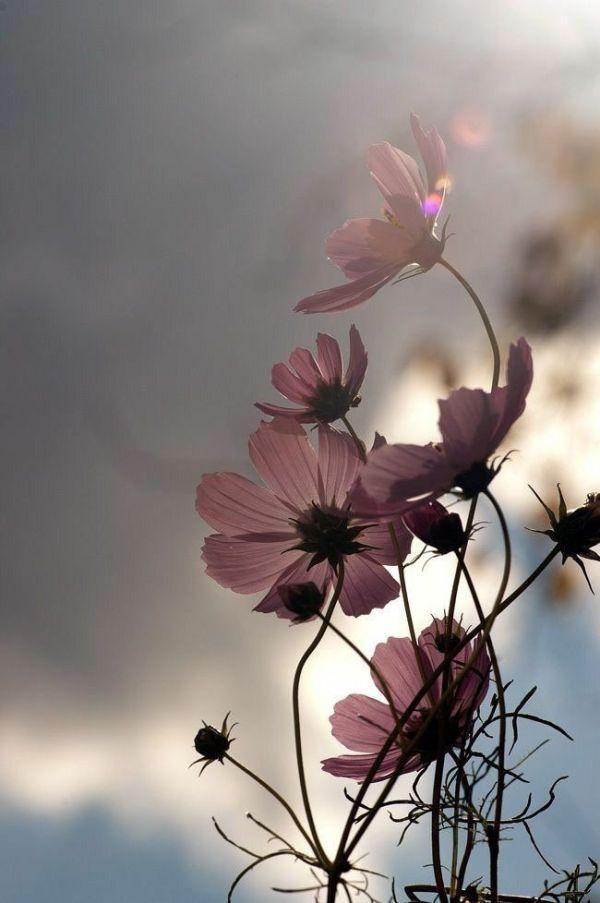 ceu e flores