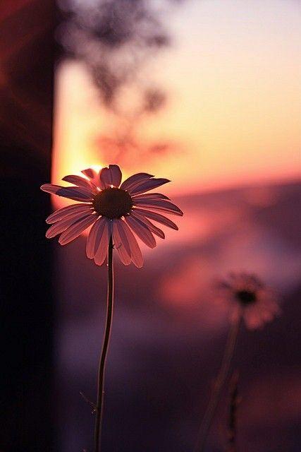 lindas petulas de flor na luz do sol
