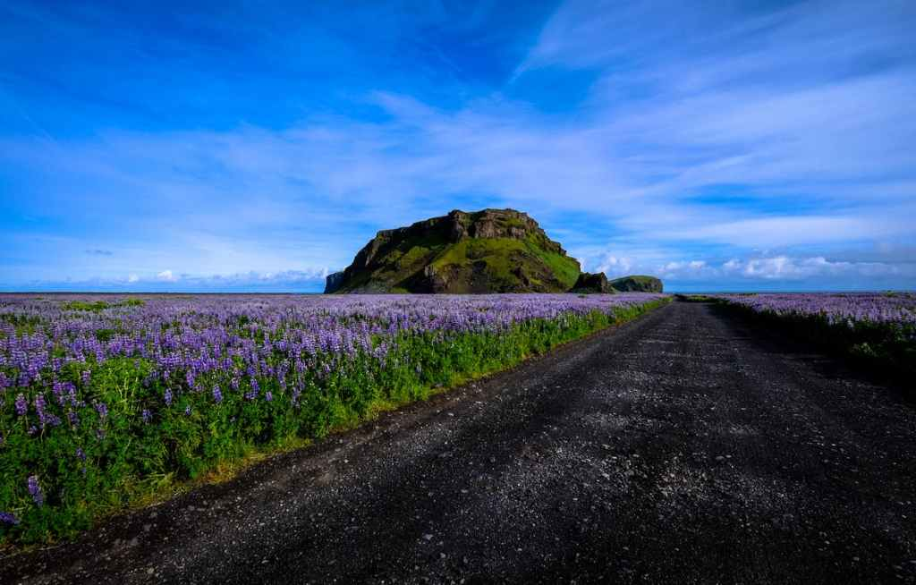 Fields of lavender against a vibrant blue sky and a black gravel road. Anxiety.