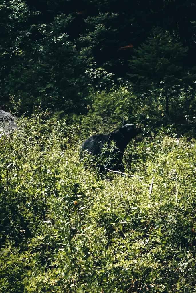 Black bear on hiking trail