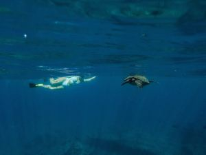 Woman swimming on side near surface looking inward sees turtle swimming a short distance from her