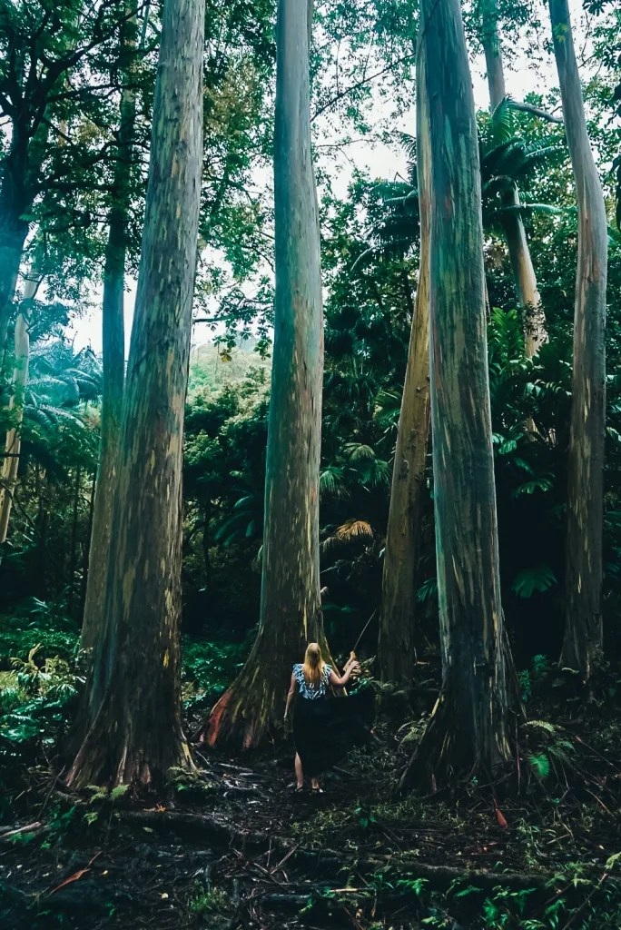 Woman in a black skirt standing between a small grove of very tall Rainbow Eucalyptus trees along the Road to Hana