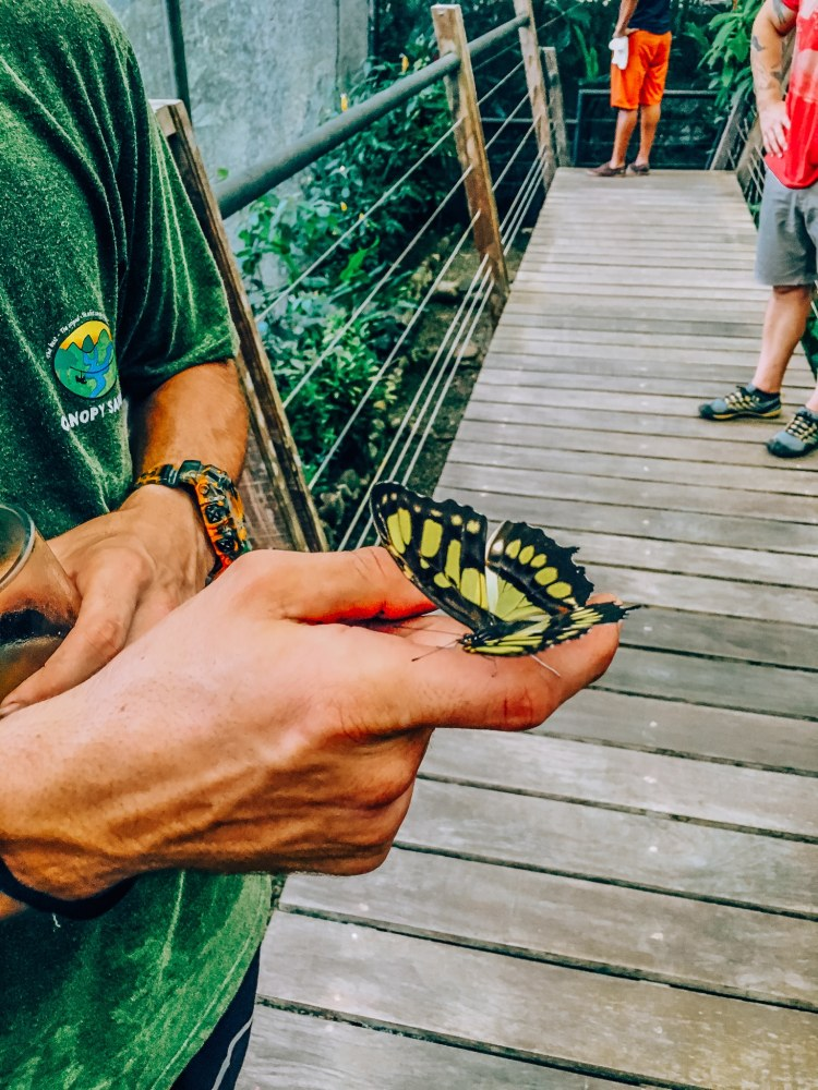 Man holding a butterfly that landed on his index finger