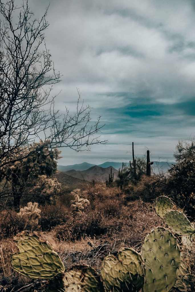Picture of the McDowell Mountains from behind some cacti
