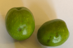 olive-manzanillo-fruit-4