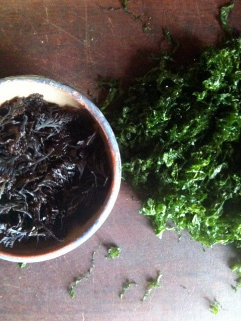 Pepper dulse and sea lettuce